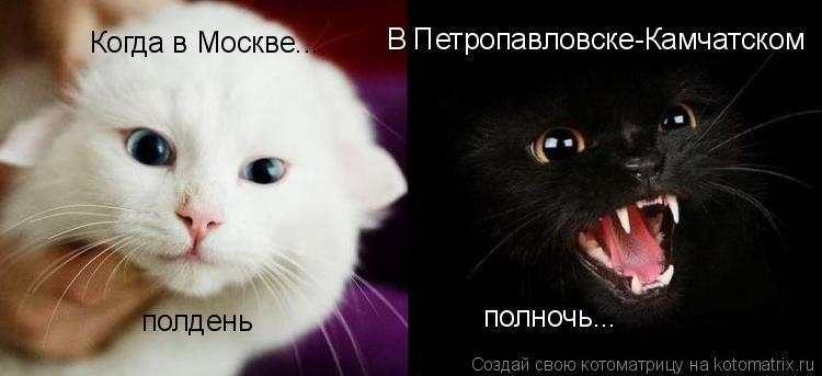 Котоматрица: Когда в Москве... полдень В Петропавловске-Камчатском полночь...