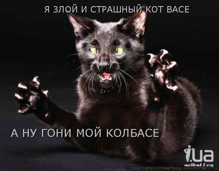 Мой чёрный кот вася