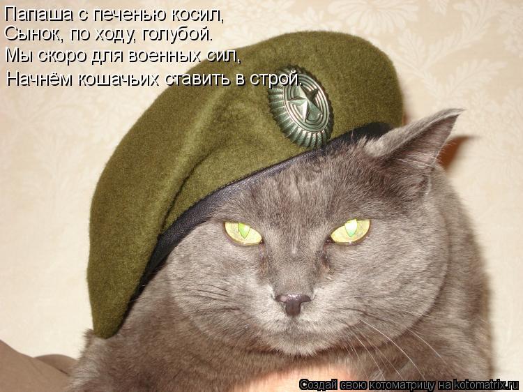 Котоматрица: Папаша с печенью косил, Сынок, по ходу, голубой. Мы скоро для военных сил, Начнём кошачьих ставить в строй.