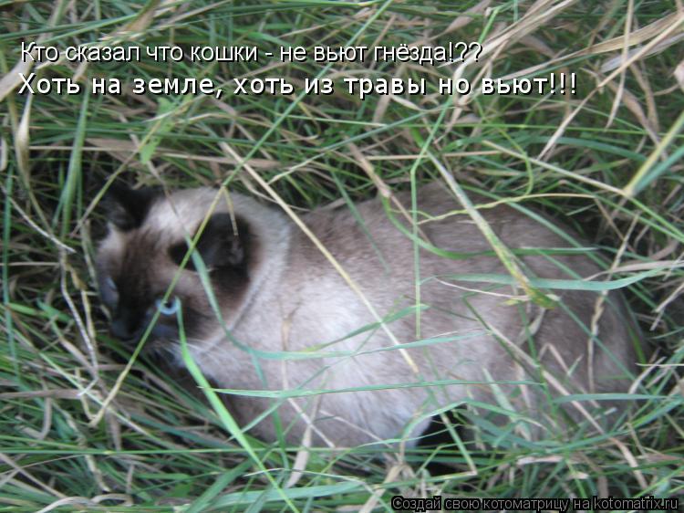 Котоматрица: Кто сказал что кошки - не вьют гнёзда!?? Хоть на земле, хоть из травы но вьют!!!