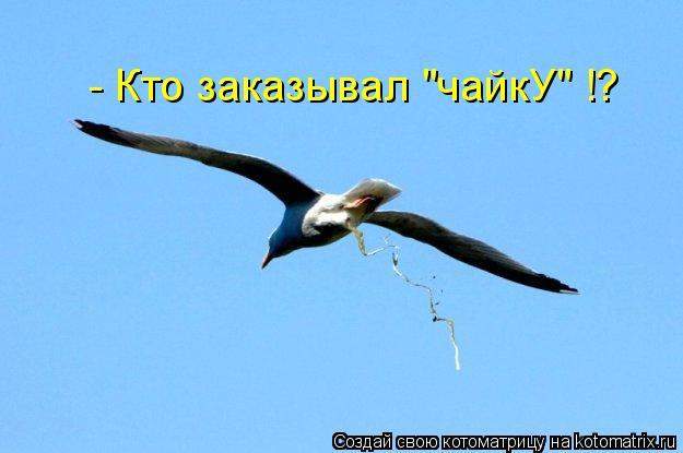 """Котоматрица: - Кто заказывал """"чайкУ"""" !?"""