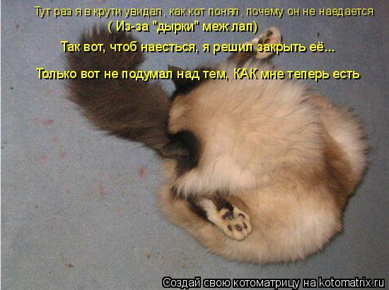 """Котоматрица: Тут раз я в крути увидал, как кот понял, почему он не наедается ( Из-за """"дырки"""" меж лап) Так вот, чтоб наесться, я решил закрыть её... Только вот н"""