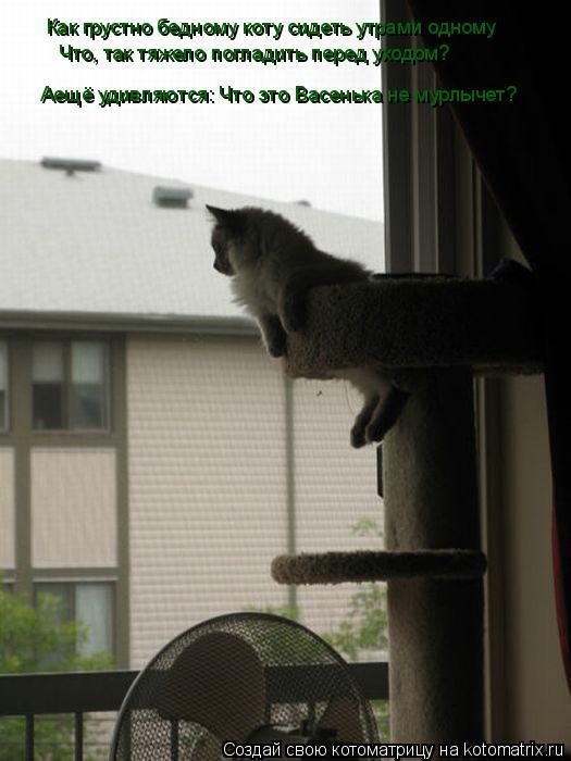 Котоматрица: Как грустно бедному коту сидеть утрами одному Что, так тяжело погладить перед уходом? Аещё удивляются: Что это Васенька не мурлычет?