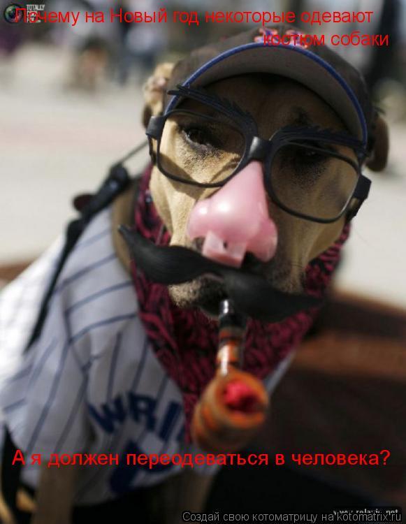 Котоматрица: Почему на Новый год некоторые одевают костюм собаки А я должен переодеваться в человека?