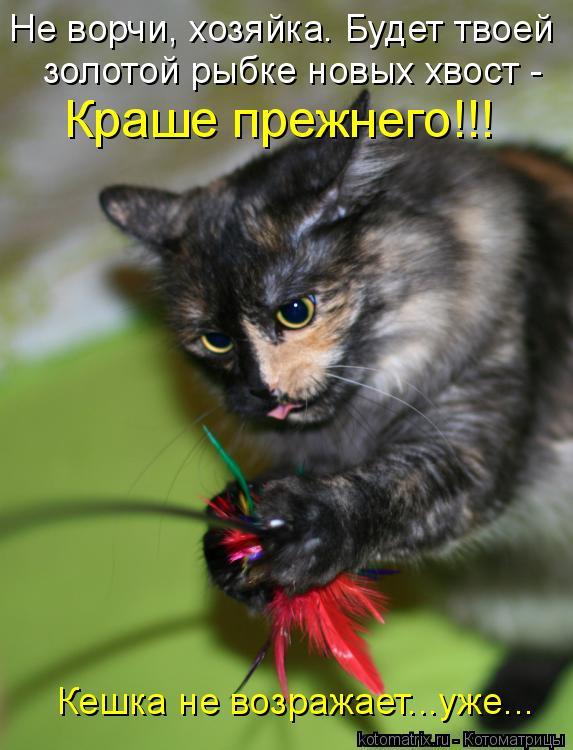 Котоматрица: Не ворчи, хозяйка. Будет твоей золотой рыбке новых хвост - Краше прежнего!!! Кешка не возражает...уже...