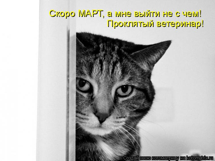 Котоматрица: Скоро МАРТ, а мне выйти не с чем! Проклятый ветеринар!