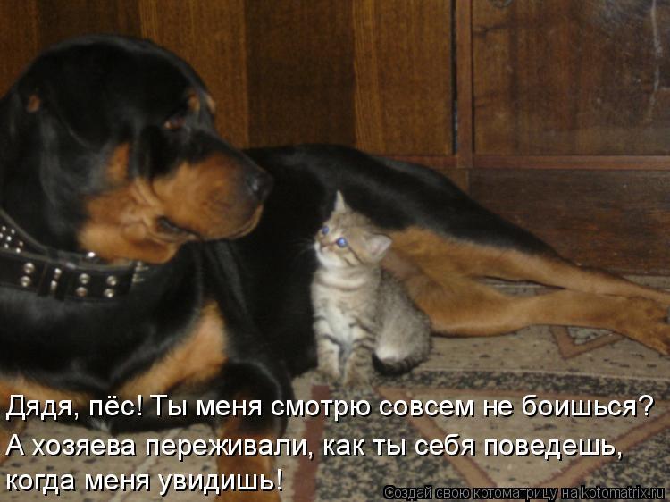 Котоматрица: Дядя, пёс! Ты меня смотрю совсем не боишься? А хозяева переживали, как ты себя поведешь, когда меня увидишь!