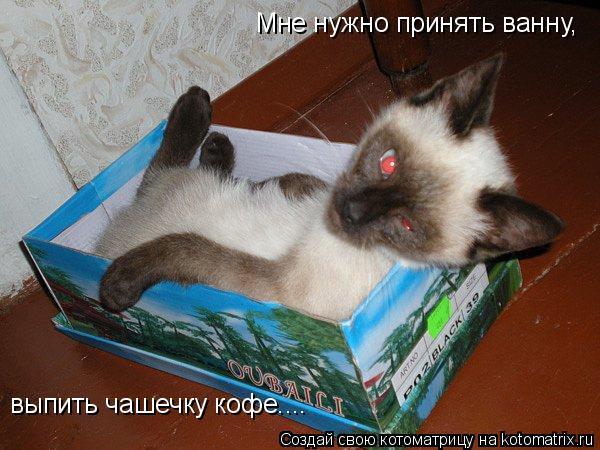 Котоматрица: Мне нужно принять ванну, выпить чашечку кофе....