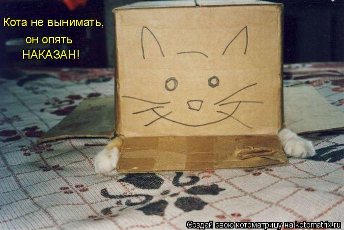 Котоматрица: НАКАЗАН! Кота не вынимать, он опять