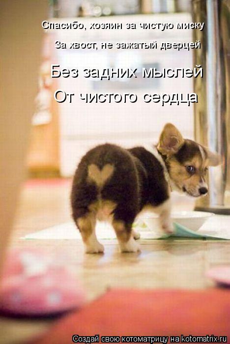 Котоматриця!)))) - Страница 8 834244
