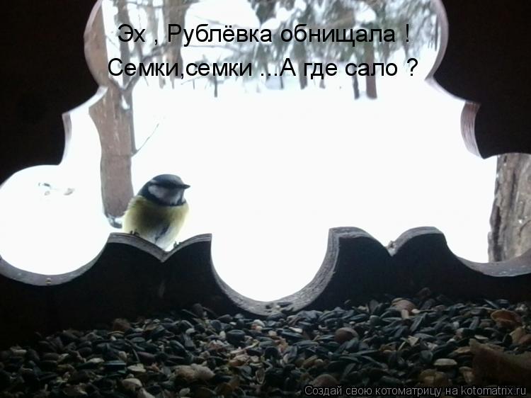 Котоматрица: Эх , Рублёвка обнищала ! Семки,семки ...А где сало ?