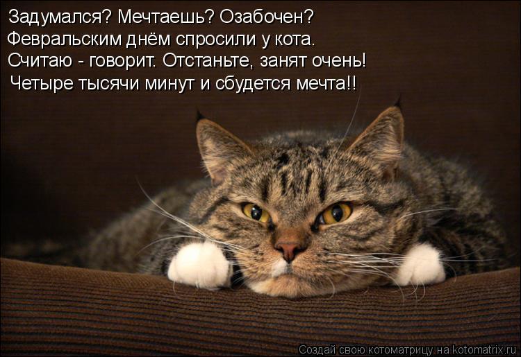 Котоматрица: Задумался? Мечтаешь? Озабочен? Февральским днём спросили у кота. Считаю - говорит. Отстаньте, занят очень! Четыре тысячи минут и сбудется меч