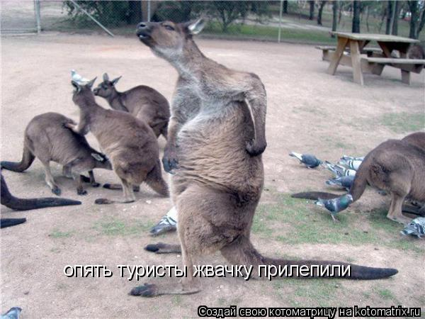 Котоматрица - опять туристы жвачку прилепили