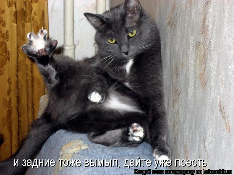 Котоматрица: и задние тоже вымыл, дайте уже поесть
