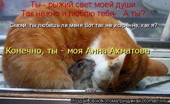 Котоматрица: Ты - рыжий свет моей души. Так нежно я люблю тебя... А ты?..  Скажи, ты любишь ли меня Вот так же искренне, как я? Конечно, ты - моя Анна Ахматова