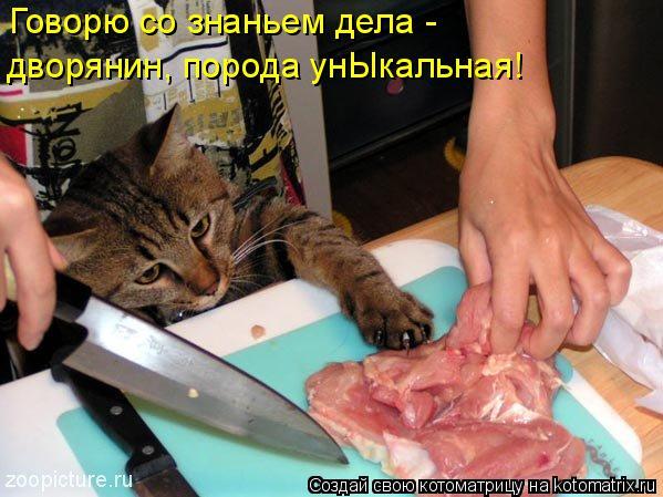 Котоматрица: Говорю со знаньем дела -  дворянин, порода унЫкальная!