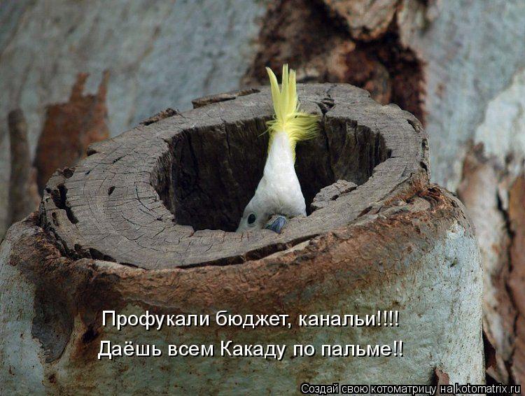 Котоматрица: Профукали бюджет, канальи!!!! Даёшь всем Какаду по пальме!!