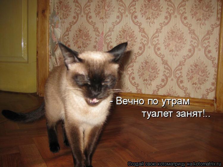 Котоматрица: - Вечно по утрам   туалет занят!..
