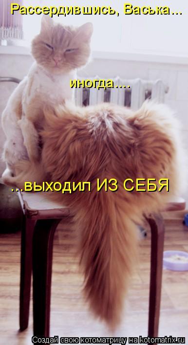 Рассердившись, Васька... иногда.... ...выходил ИЗ СЕБЯ