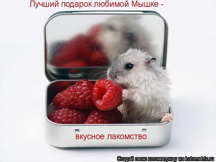 Котоматрица: Лучший подарок любимой Мышке -  вкусное лакомство