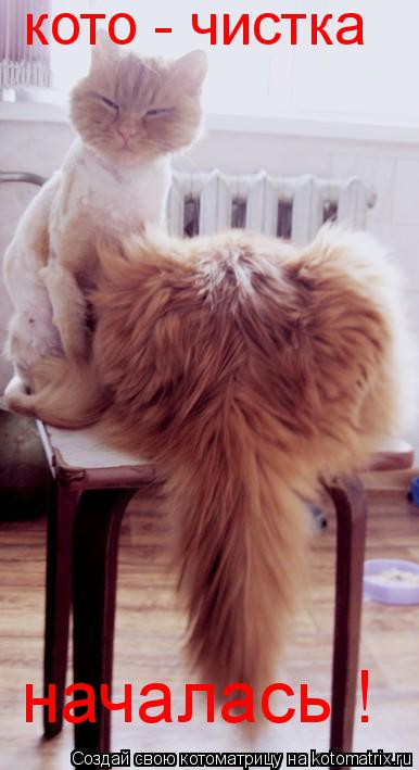 Котоматрица: кото - чистка началась !
