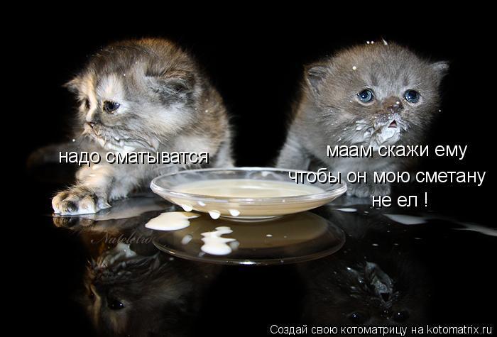 Котоматрица: маам скажи ему  чтобы он мою сметану не ел ! надо сматыватся