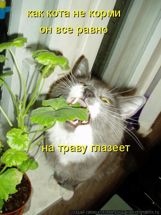 Котоматрица: как кота не корми он все равно на траву глазеет