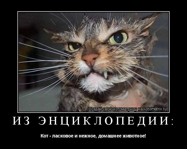 Котоматрица: из энциклопедии: Кот - ласковое и нежное, домашнее животное!