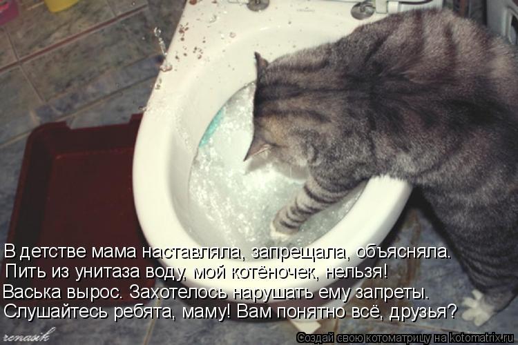 Котоматрица: В детстве мама наставляла, запрещала, объясняла. Пить из унитаза воду, мой котёночек, нельзя! Васька вырос. Захотелось нарушать ему запреты.