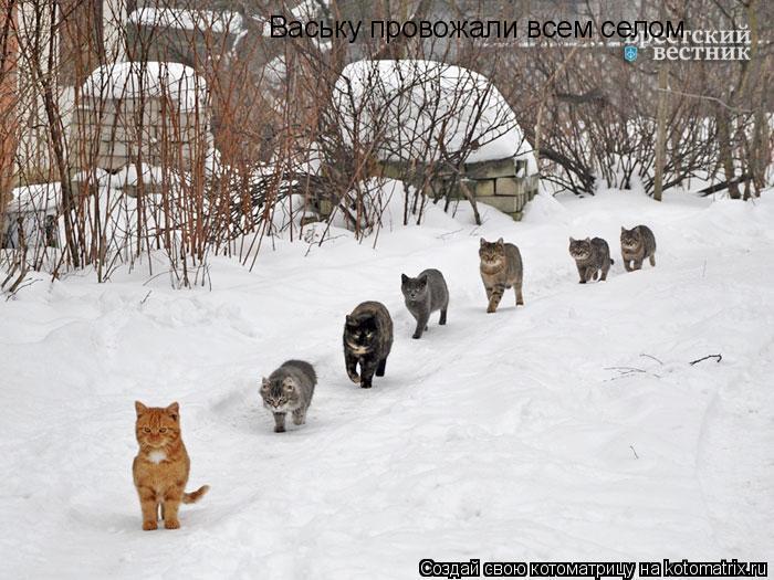 Котоматрица: Ваську провожали всем селом