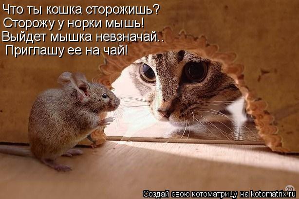 Котоматрица: Что ты кошка сторожишь? Сторожу у норки мышь! Выйдет мышка невзначай.. Приглашу ее на чай!