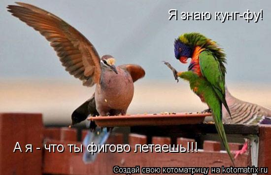 Котоматрица: Я знаю кунг-фу!  А я - что ты фигово летаешь!!!