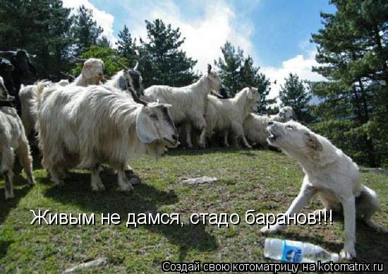 Котоматрица: Живым не дамся, стадо баранов!!!