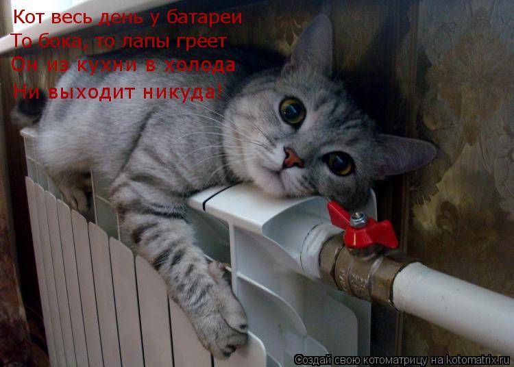 Котоматрица: Кот весь день у батареи То бока, то лапы греет Ни ...