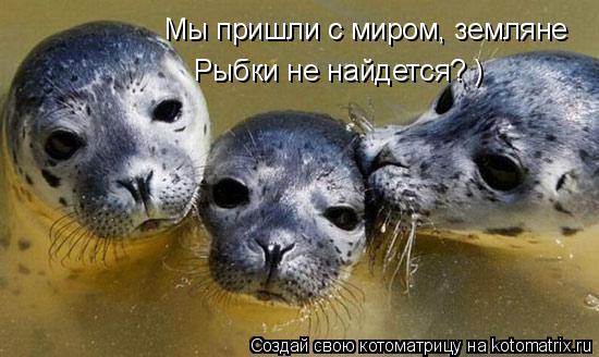 Котоматрица: Мы пришли с миром, земляне Рыбки не найдется? )