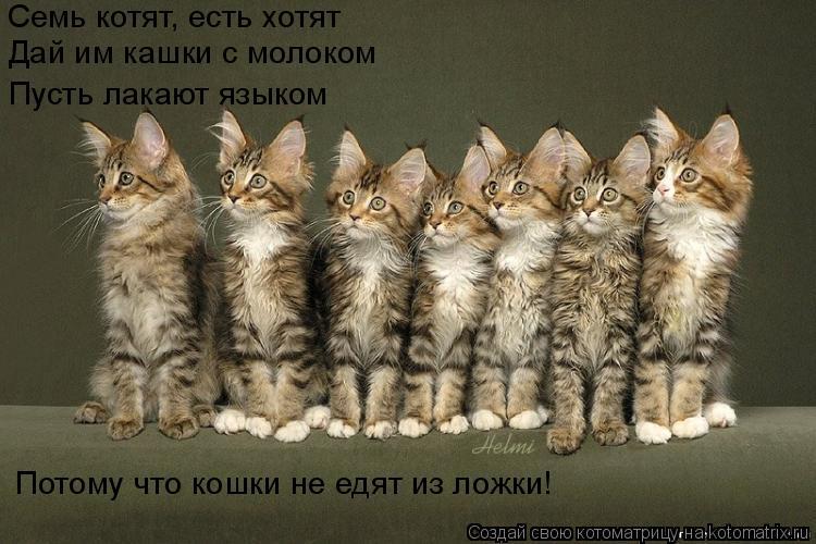 Котоматрица: Семь котят, есть хотят Дай им кашки с молоком Пусть лакают языком Потому что кошки не едят из ложки!