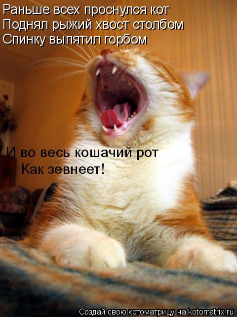 Котоматрица: Раньше всех проснулся кот Поднял рыжий хвост столбом Спинку выпятил горбом И во весь кошачий рот Как зевнеет!