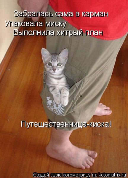 Котоматрица: Забралась сама в карман Упаковала миску Выполнила хитрый план Путешественница-киска!