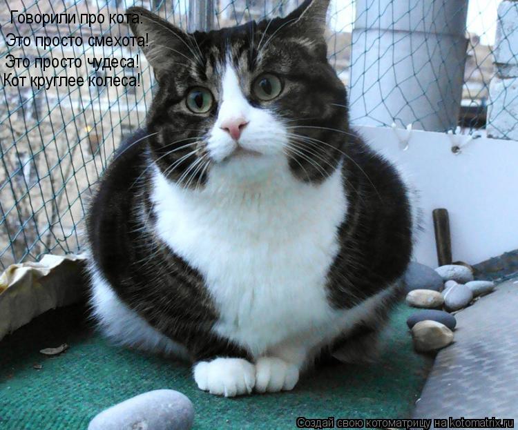 Котоматрица: Говорили про кота: Это просто смехота! Это просто чудеса! Кот круглее колеса!