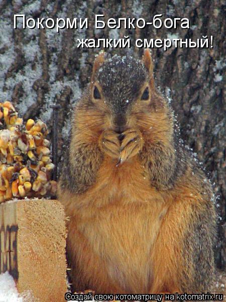 Котоматрица: Покорми Белко-бога жалкий смертный!