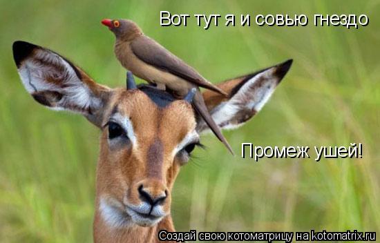 Котоматрица: Вот тут я и совью гнездо Промеж ушей!