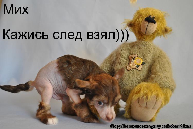 Котоматрица: Мих Кажись след взял)))