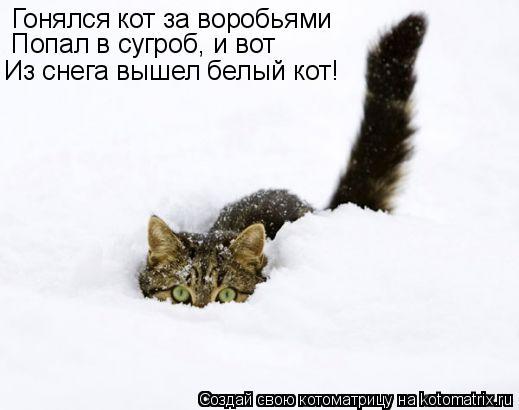 Котоматрица: Гонялся кот за воробьями Попал в сугроб, и вот Из снега вышел белый кот!