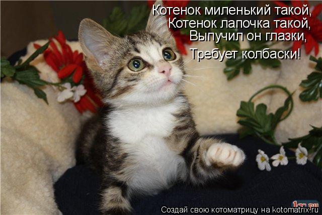 Котоматрица: Котенок миленький такой, Котенок лапочка такой, Выпучил он глазки, Требует колбаски!