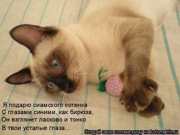Котоматрица: Я подарю сиамского котенка   С глазами синими, как бирюза, Он взглянет ласково и тонко В твои усталые глаза...