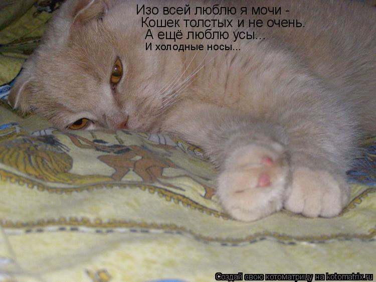 Котоматрица: Изо всей люблю я мочи -  Кошек толстых и не очень.  А ещё люблю усы...  И холодные носы...