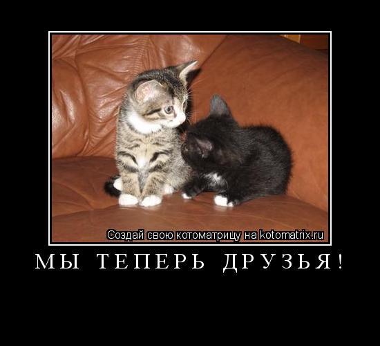 Котоматрица: мы теперь друзья!