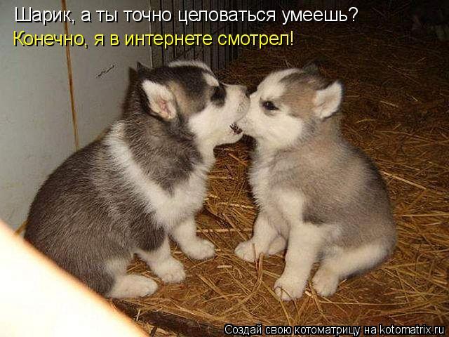 Котоматрица: Шарик, а ты точно целоваться умеешь? Конечно, я в интернете смотрел!