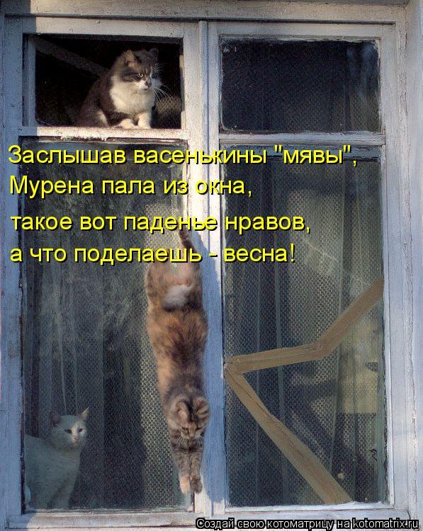 """Котоматрица: Заслышав васенькины """"мявы"""", Мурена пала из окна, а что поделаешь - весна! такое вот паденье нравов,"""