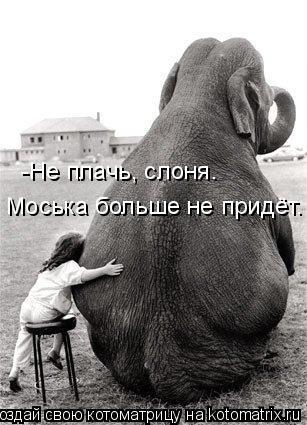 Котоматрица: -Не плачь, слоня. Моська больше не придёт.
